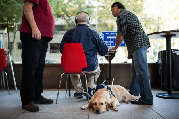 Dan Kysor's guide dog, Harry, lies next to him as poll workers help him vote using an adaptive computer at the California Museum in Sacramento, California, November 4, 2014.